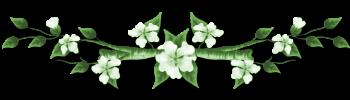 Présentation de tchoula Fleur300