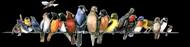 Les oiseaux sont plus que jamais en danger d'extinction S60